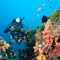 Дайвинг на Бали – лучшие места и пляжи