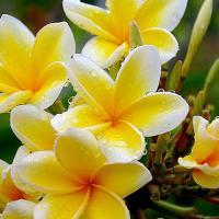SPA на бали, природа Бали