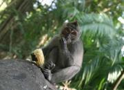 Храмы обезьян на Бали