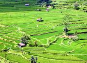 рисовые поля, рисовые террасы