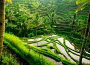 Рисовые террасы Тегаллаланг на Бали: как добраться