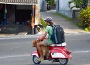 Какие водительские права на Бали подходят?