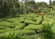 ботанический сад Бали, ботанический сад Убуд