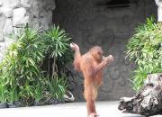Сафари парк на Бали: где находится, часы работы, отзывы