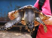 экскурсии Бали, остров черепах, что посмотреть